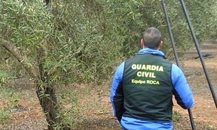 La Guardia Civil detiene a tres personas e investiga a otras cuatro, como presuntos autores de hurto continuado de aceituna