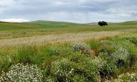 El Colegio de farmacéuticos ofrece consejos sobre la alergia al polen en primavera