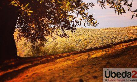 Poemas sobre el olivo por Isabel Rezmo