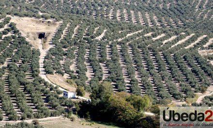 Crespo urge a la aplicación del nuevo artículo 167 bis de la OCM desde el inicio de la campaña como mecanismo de regulación del aceite