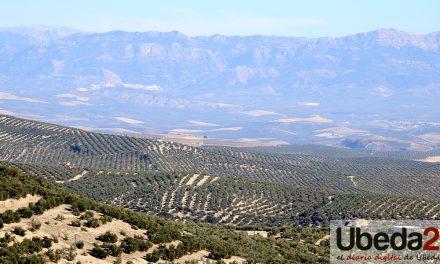 La subdelegada destaca que las medidas impulsadas por el Ministerio de Agricultura mejorarán la situación del olivar
