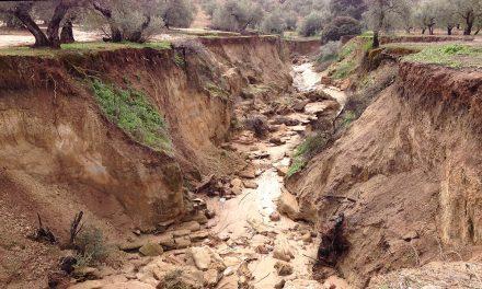 Investigadores de la UJA desarrollan un método para la monitorización de la erosión del suelo del olivar en relación con la variación de las condiciones pluviométricas