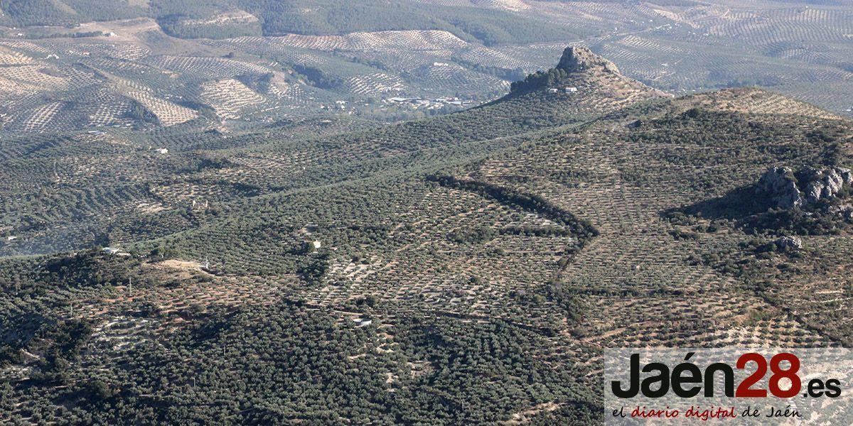 COAG Jaén valora positivamente la rebaja de los módulos del olivar al 0,18%