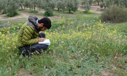 Investigadores de la UJA consideran esencial el manejo extensivo de las cubiertas vegetales de olivar y la presencia de áreas naturales para incrementar la diversidad de especies y sus funciones